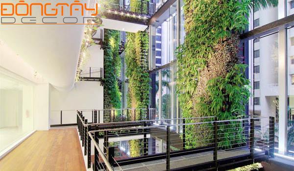 Bức tường thực vật, thảm thực vật, màu xanh của cây cỏ được sử dụng ngày càng nhiều trong các căn hộ, văn phòng...