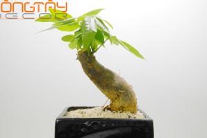 5 loài cây phong thủy giúp tăng tài lộc cho gia chủ